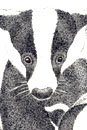 Pen and Ink Drawing of Animals - Badgers