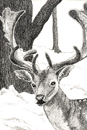 Pen and Ink Drawing of Animals - Fallow Stag in wood