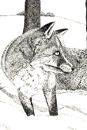 Pen and Ink Drawing of Animals - Fox in wood