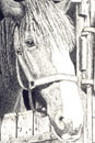 Pen and Ink Drawing of Animals - Horse in Stable