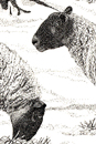 Pen and Ink Drawing of Animals - Winter Sheep