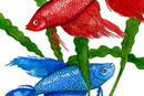 Watercolour of Fish - Siamese Fighting Fish