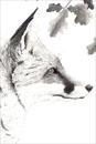 Pen and Ink Drawing of Animals - Watching Fox