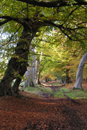 Photograph of Ashridge Forest