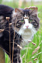 Photograph of Farm Cat